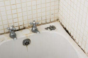 bathroom mold removal, bathroom mold cleanup