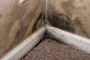 mold damage martin, mold removal martin